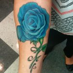 Stunning Blue Rose