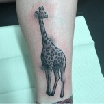 Pretty black and grey Giraffe