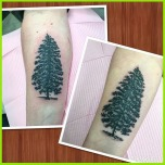 Evergreens for Sisters
